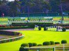 晴天の日の中山競馬場の画像